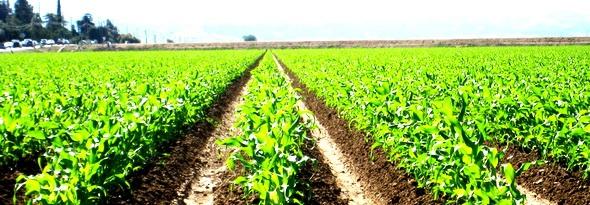 Липецкие растениеводы увеличат производство в 2014 году на 5%