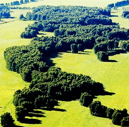 Лесообразовательный процесс