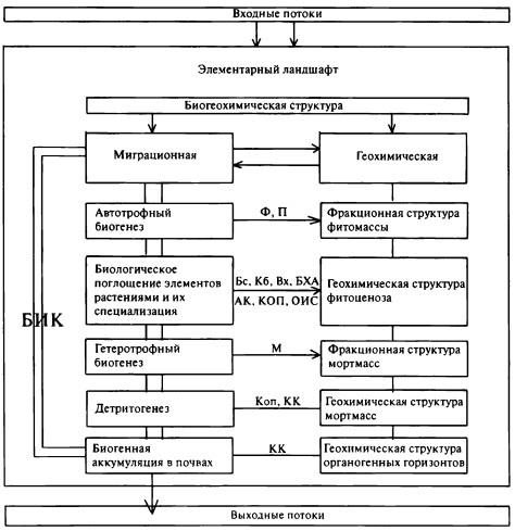 Биогеохимическая структура элементарного ландшафта