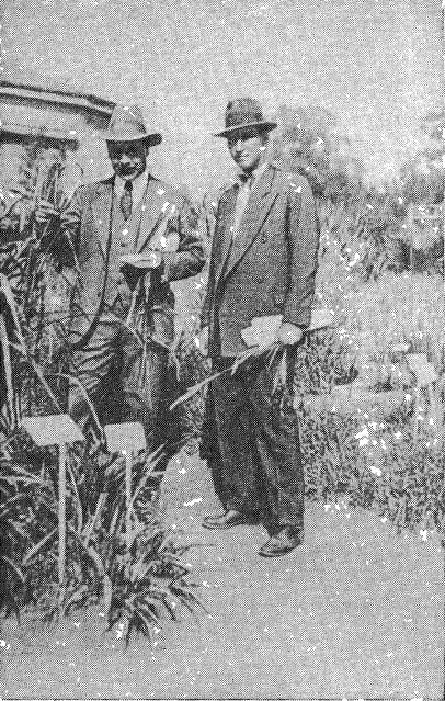 Буэнос-Айрес. В ботаническом саду: Н.И. Вавилов (слева) и д-р Генри (Henry) (27 ноября 1932 года)
